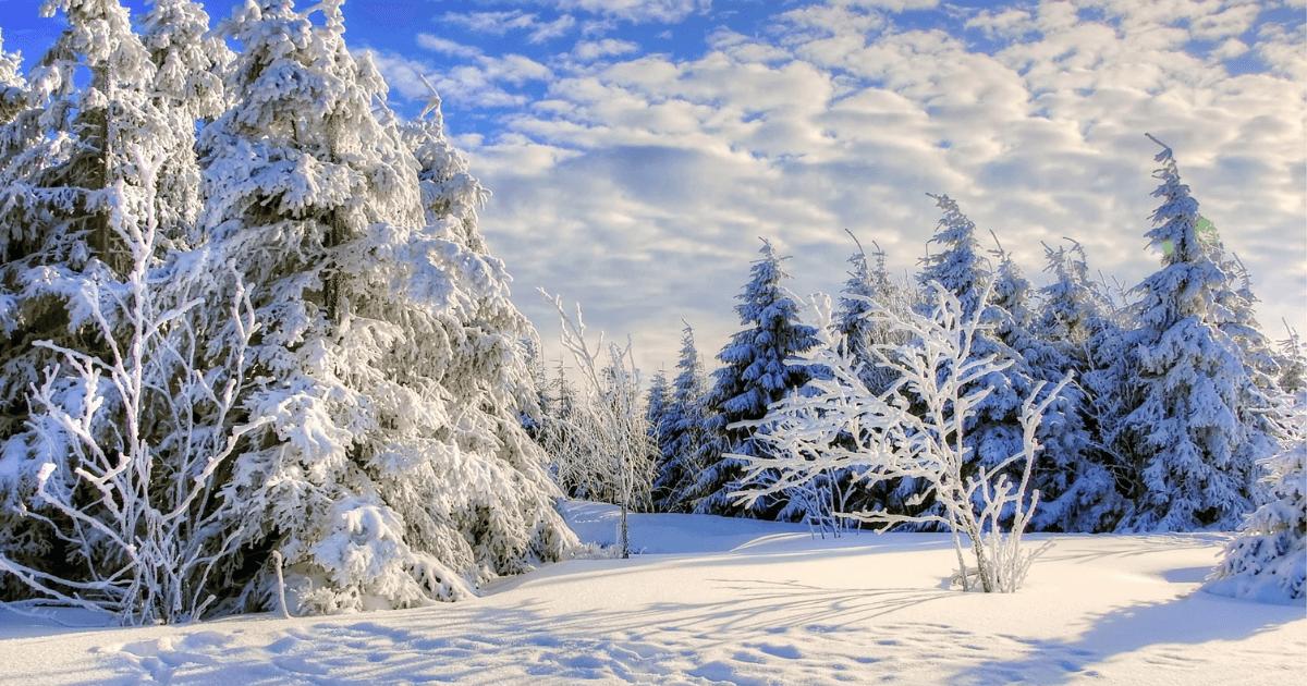 【KOIVE(コイヴ)白樺樹液の口コミ】天然由来の美容成分でハリ・ツヤを追求